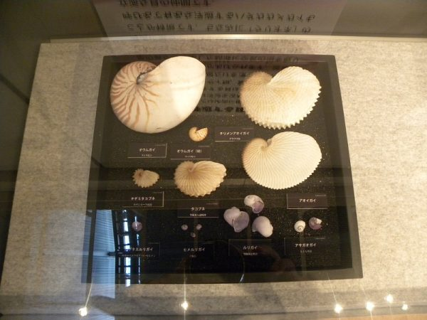 浮遊する貝