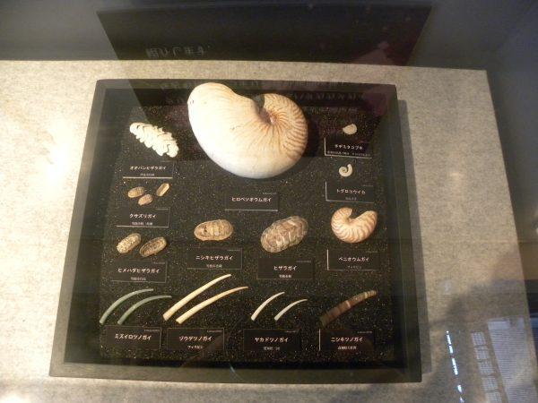 貝に見えない貝